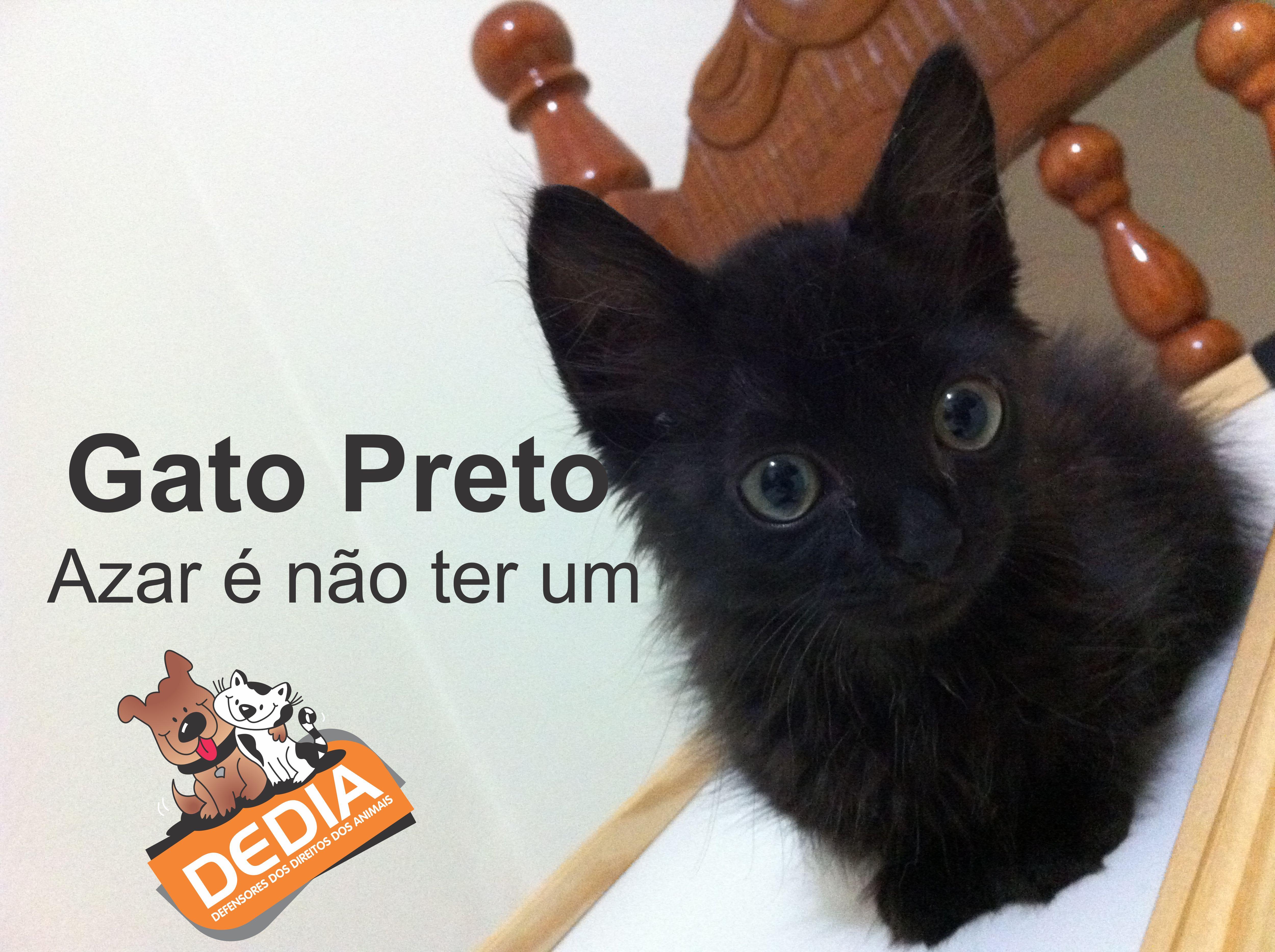Sexta Feira 13 Gato Preto Azar é Não Ter Um