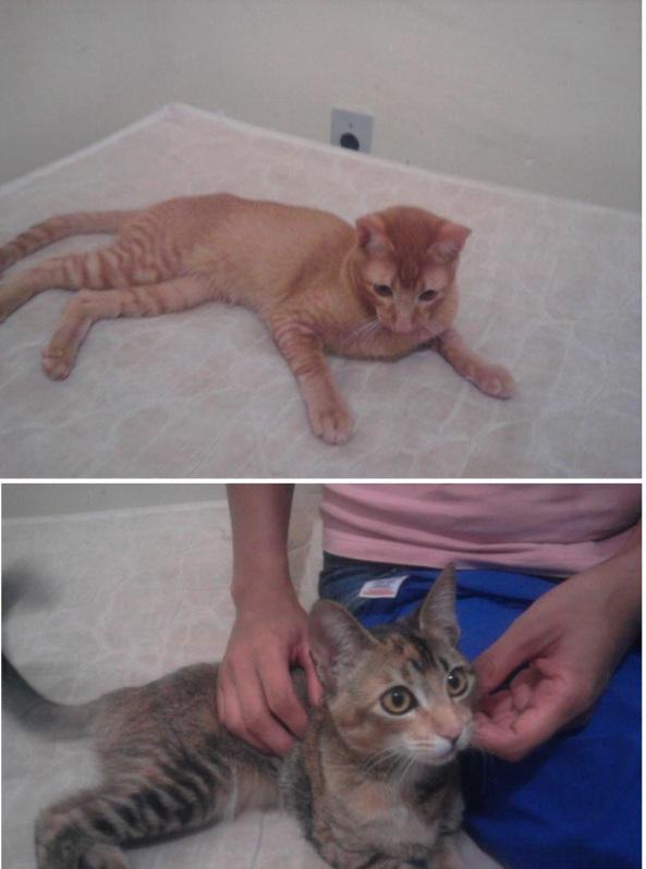 Gatinhos adoção