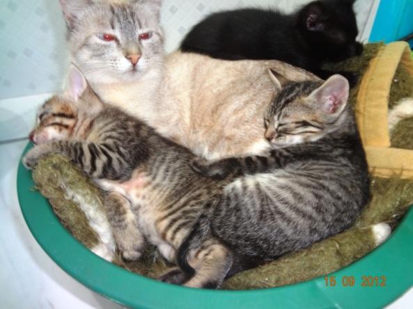 gatinhos da Paula